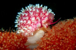 lembeh-yos-dive-eco-beach-resort